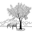 bench in park with tree city park landscape vector image vector image