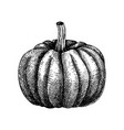 hand sketched pumpkin butternut squash drawing t vector image vector image