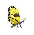 beautiful yellow butterfly insect vector image
