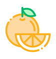 healthy food fruit orange thin line icon vector image