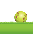 softball in grass vector image vector image