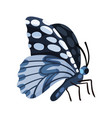 beautiful gray butterfly insect vector image