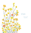 Daffodils floral graphic background vector image