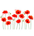 red poppy flowers background vector image vector image