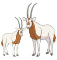 set of color with oryx antelope vector image vector image