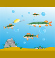 fishing on pike and perch vector image