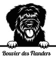 peeking dog - bouvier des flanders breed - head vector image vector image