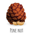 tree pine nut icon cartoon style vector image