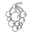 ripe grape icon outline style vector image vector image