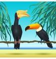 Toco toucan and rhinoceroc bill realistic birds vector image