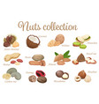 collection mix of different types nuts vector image