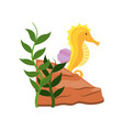 cute seahorse isolated icon vector image vector image
