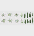 floral bouquet design set of tender white lily vector image