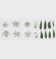 floral bouquet design set tender white lily vector image vector image