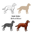 irish setter dogs sketches vector image vector image