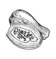 papaya sketch engraving vector image