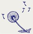 Blow Dandelion vector image vector image
