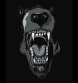 grizzly bear t-shirt design vector image vector image