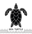 sea turtle icon 02 vector image vector image