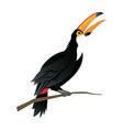 cute cartoon toucan funny cartoon tropical bird vector image vector image
