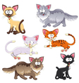 Family of cats vector image