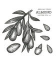 hand drawn sketch almond branch organic food vector image