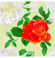 seamless texture white and orange roses with buds vector image vector image