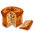 baked panettone cake vector image vector image