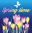 Beautiful spring background with crocuses vector image vector image