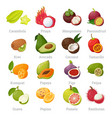 exotic tropical fruits set with names vector image