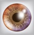 eye iris realistic anatomy concept vector image vector image