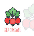 red currant icon over white in flat style vector image