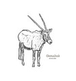 standing gemsbok with two horns hand draw vector image vector image