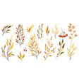 decorative autumn branches vector image