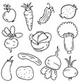 doodle of vegetable collection hand draw vector image vector image