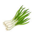 green onion spice realistic colored vector image vector image