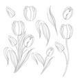 hand drawn tulips collection in line style contour vector image