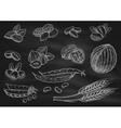 Nuts grain chalk sketch icons on blackboard vector image