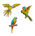 set of parrots flying vector image