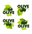 green olive leaves lettering compositions and oil vector image