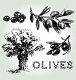 olives set sketch vector image vector image