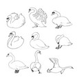 outline swans set vector image vector image