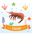 shrimp cartoon character vector image vector image
