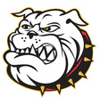 angry bulldog mongrel vector image vector image