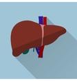 human liver flat design vector image vector image