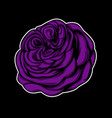 purple rose with black background vector image vector image