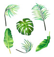 set botanical tropical vector image vector image