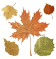 hand drawn autumn leaves vector image vector image