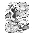 koi carp fish sketch vector image
