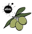 berries green olives vector image vector image